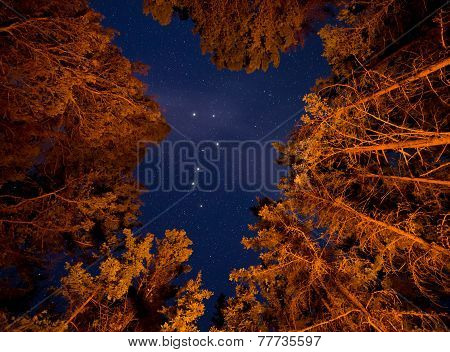 Big Dipper Visible Through Orange Lit Trees
