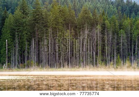Lakeside Trees With Mist