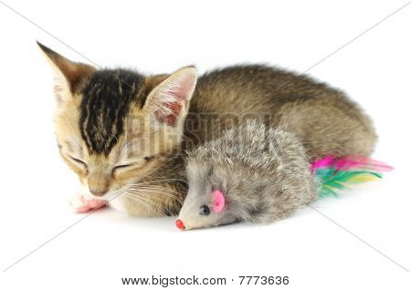 Sleeping Kitty And Toy Mouse