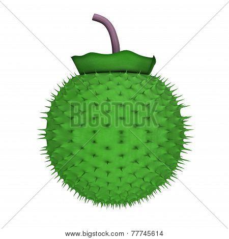 Datura Fruit