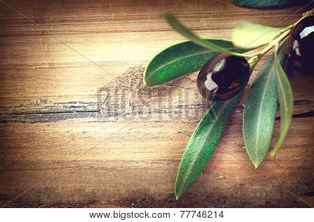 Olive over Wood Background. Olives branch on the wooden table. Vintage toned