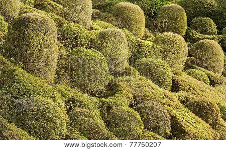 Shrubs Of Trees.