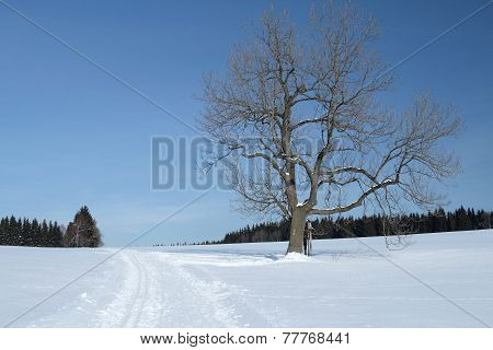 Snowy Landscape with a Solitary Tree