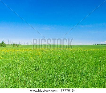 Field Landscape Vibrant Nature