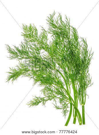 Dill Herb Leaf Isolated On White. Food Ingredient