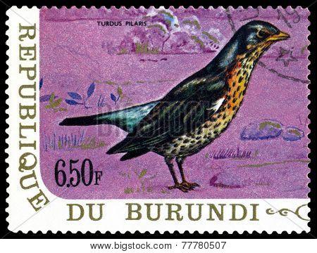 Vintage  Postage Stamp. Bird Fieldfare.