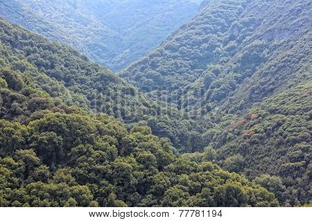 National Forest In California