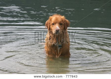 Sad Wet Dog