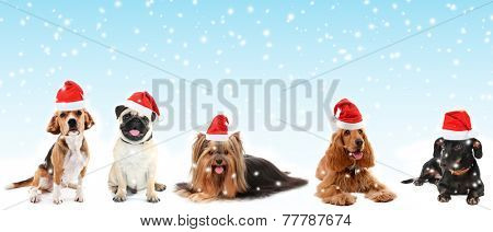 Cute pets in Santa hats on blue background