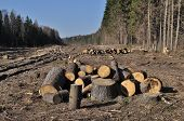 stock photo of boggy  - Deforested area in a forest with cutted trees Russia - JPG