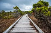 stock photo of long distance  - Marsh with Trees and long boardwalk going into distance - JPG