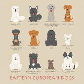 stock photo of vizsla  - Set of eastern european dogs eps10 vector format - JPG