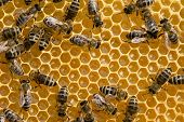 foto of honeycomb  - Macro shot of bees swarming on a honeycomb - JPG