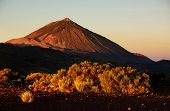 picture of canary  - El Teide National Park - JPG