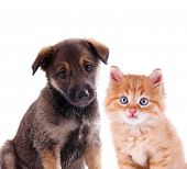 foto of little puppy  - Funny puppy and little red kitten isolated on white - JPG