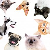 foto of puss  - Collage of cute dogs and cats isolated on white - JPG