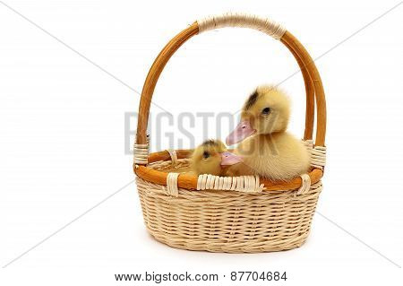 Ducklings In A Basket Isolated On A White Background