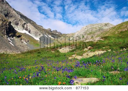 Flowers And Mountains. Altay. Russia.