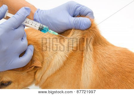 Closeup Vet Giving Injection The Dog