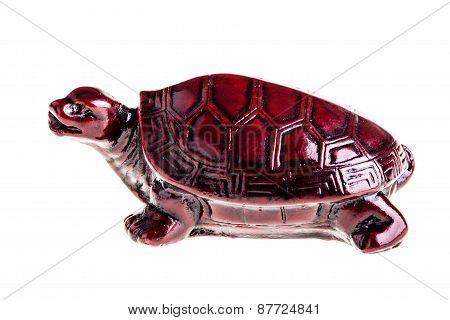 Chinese Tortoise