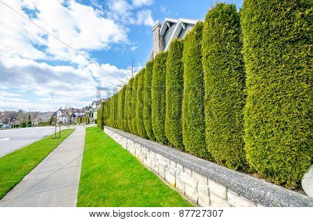 Beautiful street with a hedge fence. Landscape trimming design.