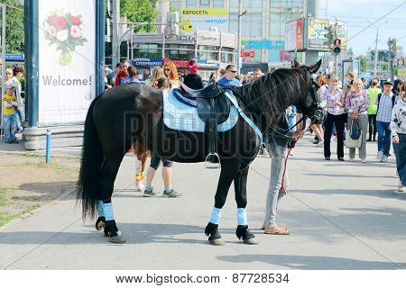 Perm, Russia - Jun 6, 2014: Black Horse Stands On Street During White Nights Festival. Open Air Fest