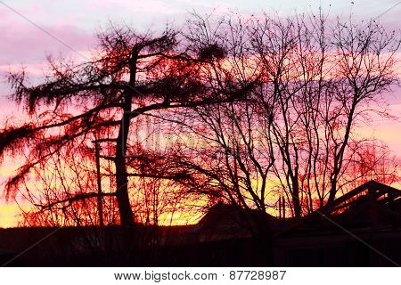 Black Silhouettes Of Trees Against Backdrop Of Beautiful Pink Sunset