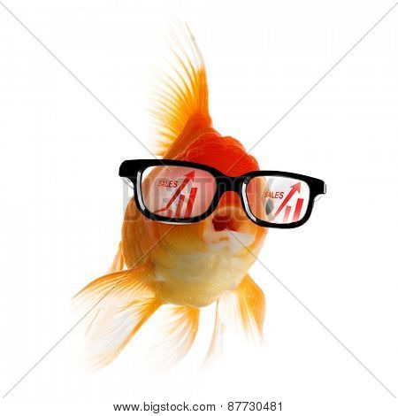 Smart Gold fish in glasses looking at sales growth graph