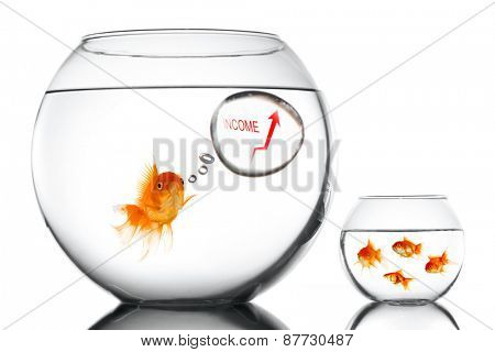 Golden fsh in aquarium teaching small how to increase income