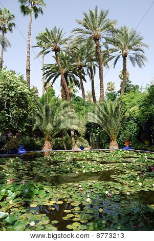 Palm Trees and Lily Pond