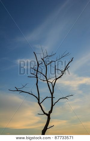 Dead Tree With Sky Background