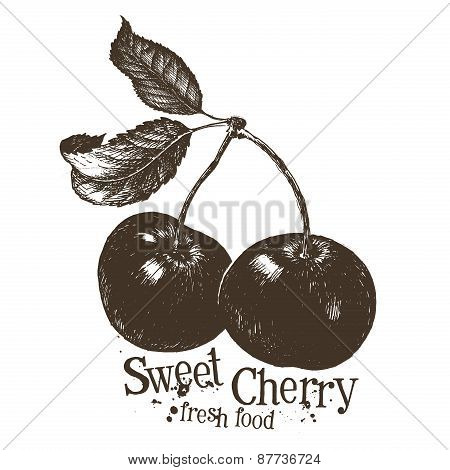 cherry vector logo design template. fruit or fresh food icon.