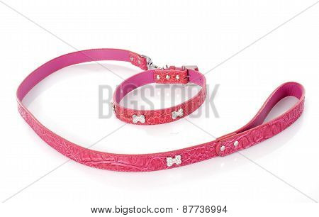 Leash And Collar