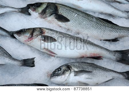 Fresh Saltwater Fish On Crushed Ice.