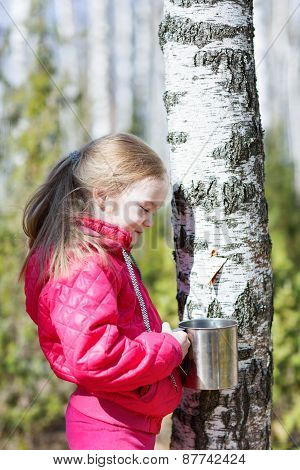 little girl collects birch sap in the woods