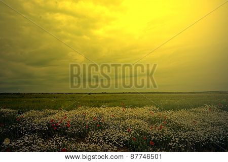 Landscape With Poppies And Chamomile In Sunset Light 5
