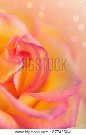 Vertical Background For Design With A Yellow Pink Rose