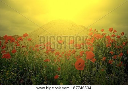 Field Of Poppies And A Sand Dune In Sunset Light