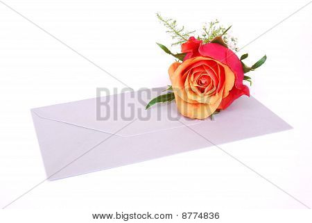 Red rose on envelop