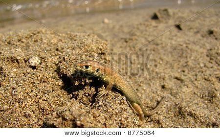 Cute baby lizard