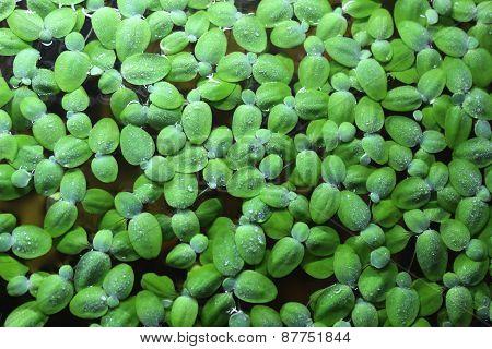 Algae Background