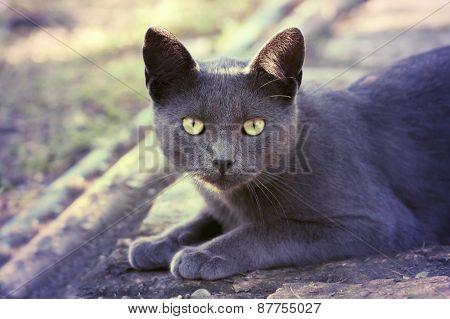 Silver Cat In Retro Vintage Filter