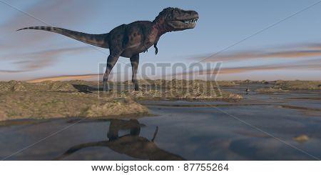 tarbosaurus walking on watered terrain