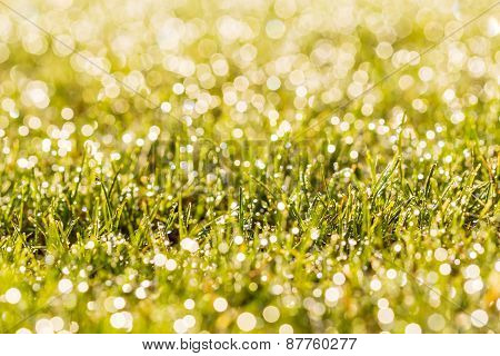 Dewy Grass With Blurred Background