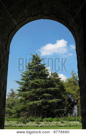 Arch and Cedar