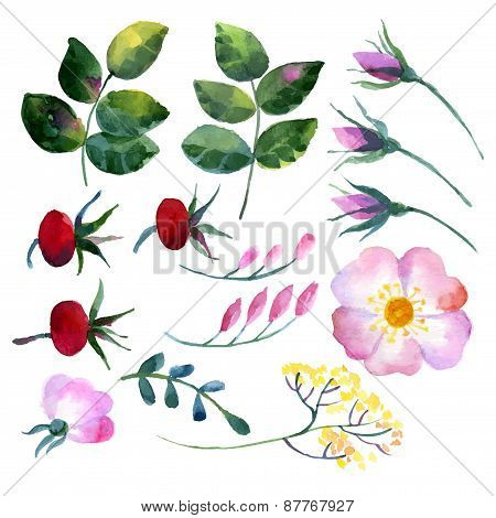 Set of watercolor elements rosehip