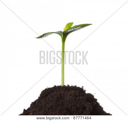 Young plant in pile of earth, isolated on white background. Concept of new life