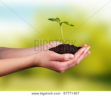 Woman hands holding young plant with green leaves. Concept of new life and environment