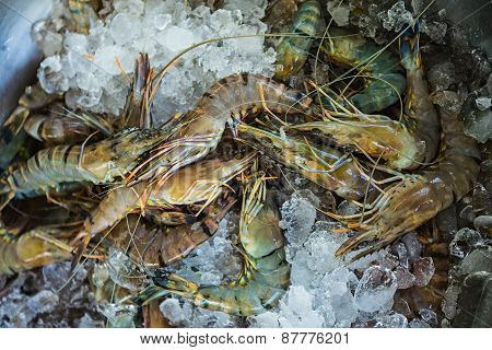 Fresh Seafood Photographed In Vietnam Fish Market