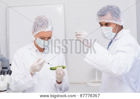 Scientists injecting an courgette in the laboratory